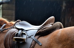 Saddle (Kathryn Mclellan) Tags: horses horse pets nature animal race mammal photography clothing nikon natural domestic equestrian saddle thoroughbred equine tack horsemanship gelding