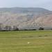 Loch Ness_9774