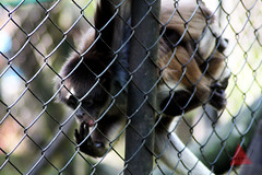 Zoolgico Matecaa, Pereira (Melissa Castro Audiovisual) Tags: caf real aves leon culebra animales tigre tigres pavo micos maltrato hipopotamo serpiente buho chimpance encerrados pereira elefantes zoologico gorilas venenosa zoologicos zuricatas