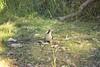 Kookaburra 1 (everyday sh⊙_☉ter) Tags: park beach forest sydney waterfalls kookaburra wattamolla garie royalnationalpark audley stanwell hackerriver