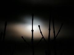 Moonlight Stillness (efroese) Tags: colorado denver moonlight