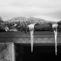 Ice - Les Vosges (Remy Carteret) Tags: roof blackandwhite bw snow france ice rooftop canon square eos blackwhite noiretblanc nb squareformat icicle mk2 5d canon5d neige stalactite vosges glace gerardmer mkii markii mark2 grardmer lesvosges 88391 canoneos5dmarkii rochesson 5dmarkii canon5dmark2 5dmark2 canon5dmarkii canoneos5dmark2 remycarteret rmycarteret