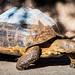 2014 - San Diego Zoo - Shelled - #6