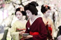 Traditional Tea Party in Kitano Shrine (Teruhide Tomori) Tags: portrait woman girl beauty festival japan lady kyoto maiko geiko   kimono tradition teaparty   kitanotenmangu baikasai ef70200mmf28l      canoneos5dmark