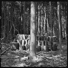 log pile 2 (Grau) Tags: kodak tmy2 tmax tlr mamiya c330 c330f d76 film analog 6x6 80mm mediumformat 120