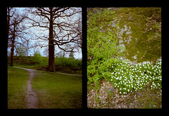 2016-04--05 - Olympus Pen EE - Kodak Ektar 100-04 (sarajoelsson) Tags: city urban color film analog pen spring diptych sweden stockholm snapshot olympus ishootfilm analogue halfframe everydaylife filmgrain vardag 2016 filmphotography penee filmisnotdead halvformat diptyk teamframkallning digitizedwithdslr