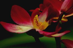 Dark red (Rajavelu1) Tags: flowers red plant green art creative artland macrophotograph canon60d