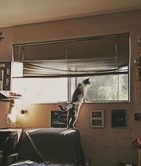 reflective (NTIPHILI) Tags: cats pets animals windowsill