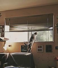 reflective (PL∆N3†∆RY D) Tags: cats pets animals windowsill