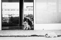 ... (Leo a Mia) Tags: maacraj2016 kitty cat cats