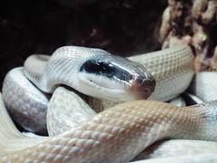 DSCF0164 (Stonehenge 68) Tags: zoo birmingham snake alabama lizard plantation antebellum birminghamzoo arlingtonhouse