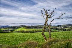 Barren Tree (NPW Photography) Tags: ireland fuji baretree lonetree southernireland barrentree nigelwheal nigelwhealphotography fujifilmxt1 corransouth