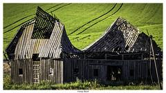 Sway Back (keith_shuley) Tags: barn washington colorful farm fields palouse easternwashington olympusomdem1