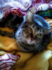 Gatos no inverno (César dos Santos) Tags: tripa winter portoalegre pets mestre home rs cats indoor