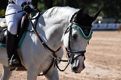 DSC_0923 (2) (ploufjf_64) Tags: paus show jumping chevaux pau 2016