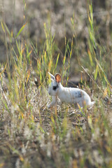 Little Rabbit (hoseph22) Tags: 700200f28 nikon sigma montana glacier national park glacial valley