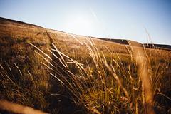 Grasslands National Park (Colby Katzberg) Tags: parks canada national camp backcountry tent vibes sunset natural light saskatchewan field canon5dmkii canon 1740mm msr explore travel