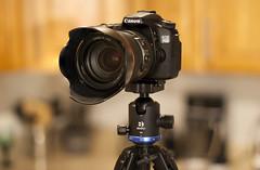 IMG_35047R+S2 (.RGB.) Tags: benroib2 benro ballhead canon canon70d 70d 24105mmf4lisusm focusstacking photoshop