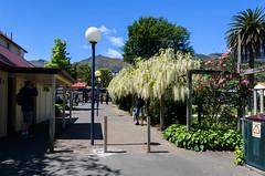A Few People Around (Jocey K) Tags: akaroa newzealand bankspeninsula southisland buildings lamps people flowers bins palmtrees hills trees roses wisteria