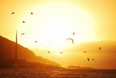 Seventeen - The Millennium Sunset. (The North West Of Nowhere) Tags: tensk galicia acorua postadesol puestadesol sunset millennium milenium obelisco gaivotas gaviotas seagulls sol sun ceo cielo sky nubes clouds terra tierra land mar sea costa coast amarelo amarillo yellow