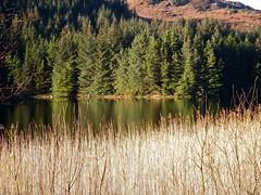Lochan Larig Cheile (nz_willowherb) Tags: winter sunshine see scotland tour perthshire visit glenogle to go lochanlarigcheile