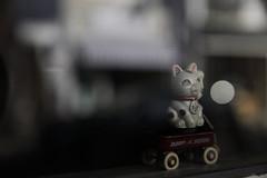 fortune cat (ito_hajime) Tags: canon eos mk2 5d markii mark2 ef2470mm 5dmarkii f28lii