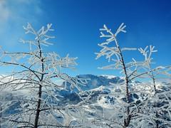 SA1 Pramollo 7/2/2015 - 20 (Cristiano De March) Tags: alberi natura neve albero piante inverno montagna scialpinismo sa1 sci pianta cristianodemarch