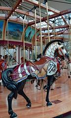 Carousel Horse (Melissa 97910313) Tags: cleveland carousel westernreserve euclidbeach