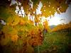 Siurana-Cornudella 23.11.2014 039 (raquelperamor) Tags: life autumn nature natura catalonia otoño catalunya tarragona priorat tardor cep autom lamanoamiga
