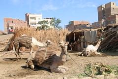 660 (gsurya) Tags: egypt abydos