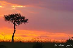 2015 kenyaIMG_1752.jpg (urban genie) Tags: africa kenya safari masai masaimara wildanimals urbangenie
