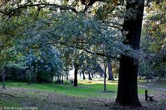 Parco_Buri036_RT8Quercus (Luigi Consiglio) Tags: colore natura giallo aurora nebbia albero autunno rosso paesaggi paesaggio bosco ambiente esterno foresta faggio hornbeam nessuno vegetazione quercia tranquillit protezione cambiamento orizzontale riservanaturale lucesolare sentierodicampagna bellezzanaturale deciduo