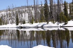 Yellowstone Pine Tree Reflection (bbosica20) Tags: snow reflection nature water pine landscape yellowstone yellowstonelake yellowstonenp lakeyellowstone