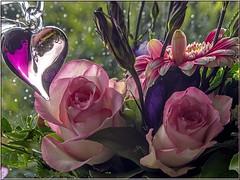 Happy Valentine's day (Ostseeleuchte) Tags: flowers blumen rosen februar blten samstag valentinstag 2015 happyvalentinesday ostseeleuchte 14022015