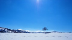 Solitude (drstar.) Tags: blue winter sky sunlight white mountain snow cold tree turkey flickr solitude tracks hills lonely bluewhite omd anatolia winterlandscape hattusas boazkale centralanatolia flickrturkey