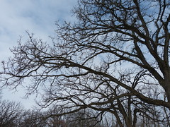 Nature Photography Program (Winter): Tree (Forest Preserve District of Will County) Tags: county tree nature creek forest grove district wildlife plum center will preserve goodenow