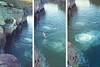 Wattamolla Beach Rock Jumping 2 (everyday sh⊙_☉ter) Tags: park beach forest sydney waterfalls kookaburra wattamolla garie royalnationalpark audley stanwell hackerriver