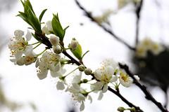 131 (jordan_0503) Tags: flower canon eos taiwan full frame  6d 2470mm f4l 131