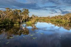 In flood (Louise Denton) Tags: flood wetseason darwin kakadu watercrossing river creek fill rain sunset light bridge nt northernterritory