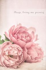 Please, bring me peonies (RoCafe) Tags: pink flowers stilllife soft pastels textured peonies nikond600 nikkormicro105f28
