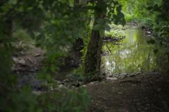 stream (brown_theo) Tags: stream big walnut creek gahanna ohio leaves green water