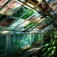 The Old Greenhouse (Karen Kleis) Tags: photomanipulation florida digitalart gotha arteffects shockofthenew crazygeniuses nehrlinggardens