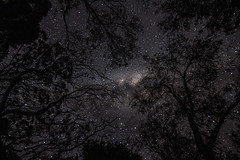 trees to the stars (nico_mller) Tags: longexposure trees canon stars eos astrophotography nightsky nightlife ballarat milkyway canonphotography canon7d