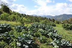 San Antonio de Prado. Medelln, Antioquia: (DAIRO CORREA) Tags: dairo correa gutirrez dairocorrea colombia amrica latina suramrica suramerica