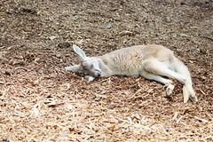 IMG_1948 (jmac33208) Tags: new york animal animals zoo land mills adirondack vails