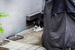 Today's Cat@2016-07-28 (masatsu) Tags: cat catspotting thebiggestgroupwithonlycats pentax mx1