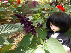 Can you spot her? (azaeldragon.cd) Tags: bjd luts kiddelf elfani flowers garden gilroygardens