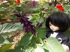 Can you spot her? (Azubby) Tags: bjd luts kiddelf elfani flowers garden gilroygardens