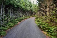 The Impassible Trail (Mycophagia) Tags: trail steep climb vermont vt trees green radio ww2 towers radiotowers