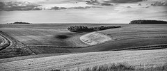 Inshaw's land desaturated (HHH Honey) Tags: sonya7rii salisburyplain wiltshire summer landscape minolta minolta100200mm googlenikcollection silverefexpro inshaw curves downs copse